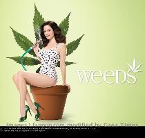 Weeds Season 6