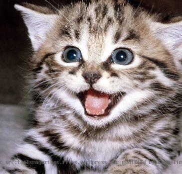 Kitten season is approaching