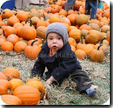 Pumpkin Patch on the streets