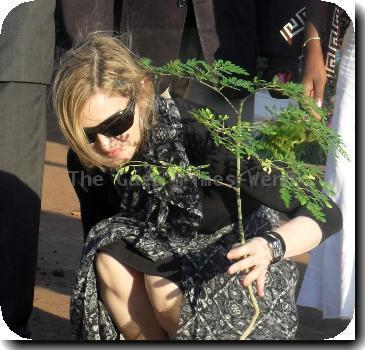 MADONNA PLANTS TREE TO LAUNCH MALAWI SCHOOL PROJECT