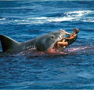 Egypt Shark Attack