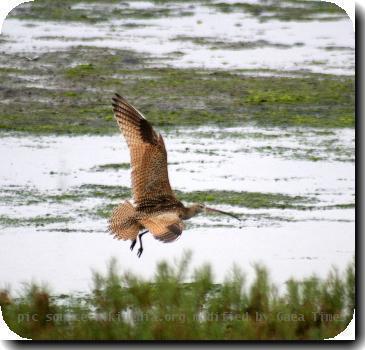 Flying bird (2005)