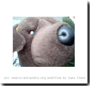 this is a picture of my stuffed dog for my page